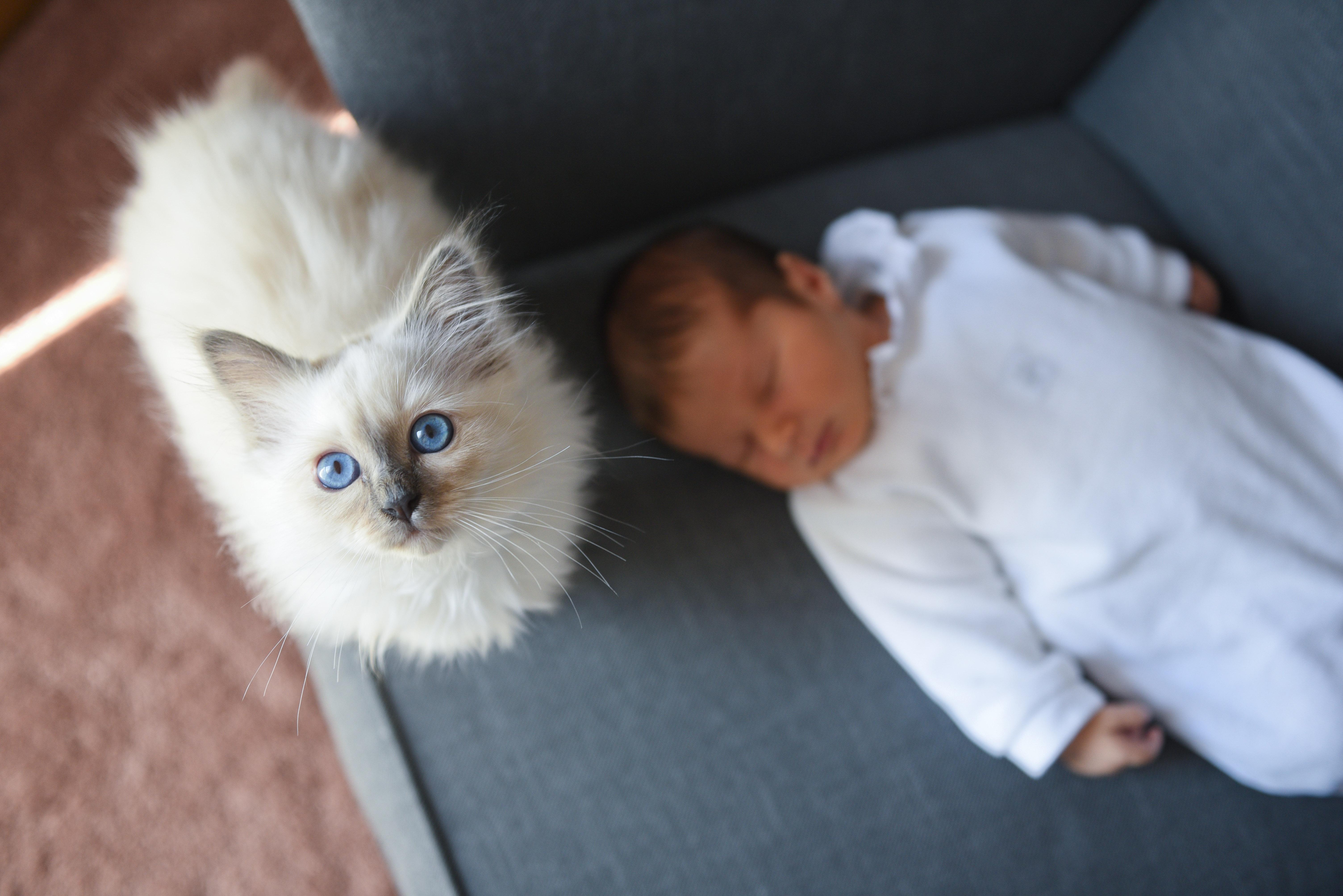 foto de séance photo nouveau né toute douce à domicile - Aurélie Raisin ...